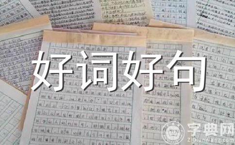 【热】元旦800字作文合集8篇